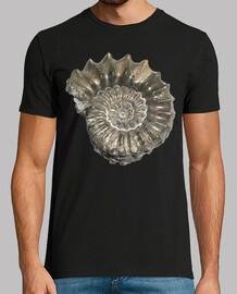 Amonita / Nautilus / Fibonacci
