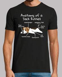 Anatomía De Un Jack Russell Terrier