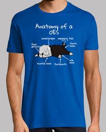 Anatomía De Un Perro Bobtail