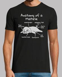 Anatomía De Un Perro Maltese
