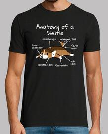anatomie d39un chien shetl and chien de