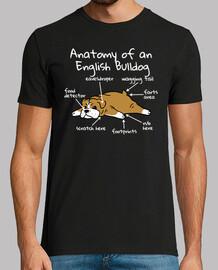 Anatomie eines englischen Bulldoggenhun