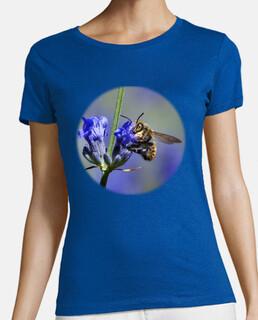 ape su fiori di lavanda (petto)