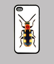 Asparagus beetle-Escarabajo espárrago