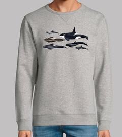 Blackfish: orcas y ballenas piloto