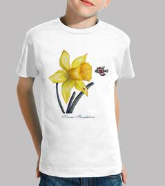 botanico futuro stu die s: Daffodil