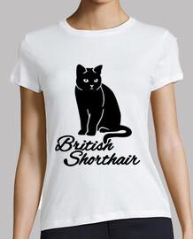 britannique shorthair chat