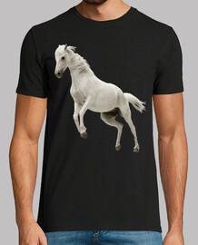 Caballo Blanco Hipica Equitacion Doma