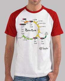 Calvin Cycle  (fondos claros)