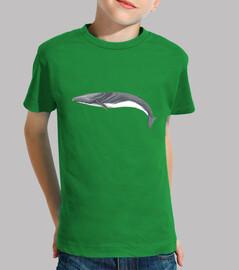 Camiseta niño niña Rorcual común