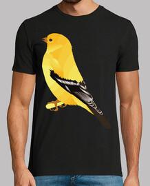 canari / oiseau / oiseau