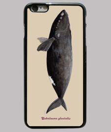 cas de la baleine noire de l'atlantique