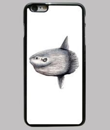 case sunfish (mola mola)