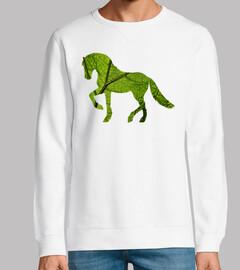 cavallo 1