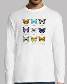 collection de papillon