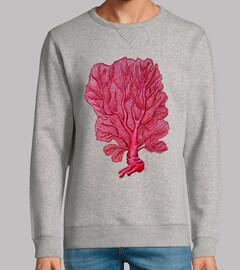 Coral rojo Venus (Gorgonia flabellum)