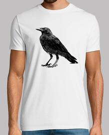 corbeau poe