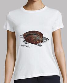 Cosmic turtle 1