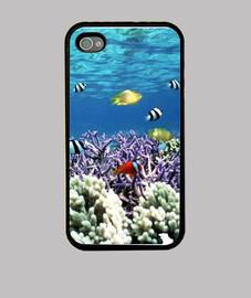 couverture corallienne