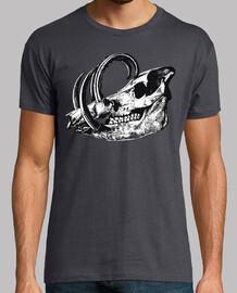 Crâne / crâne / fossile / os de mammout