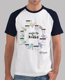cycle de krebs