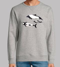 Delfin de Commerson tonina overa