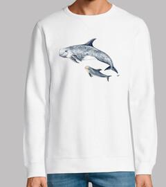 Delfín de Risso calderón gris (Grampus g