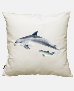 delfin tümmler (tursiops verkürzungen)