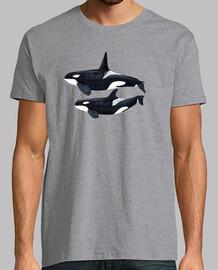 duo orque (orcinus orca) t