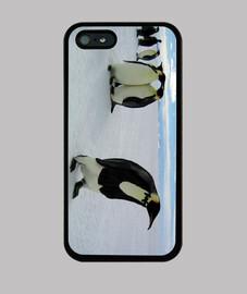 Elegant penguin