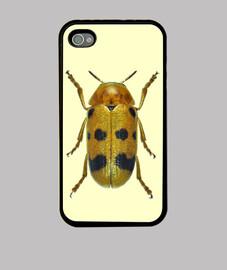Escarabajo Melitonoma sobrina