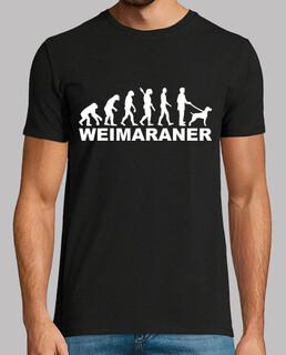évolution de weimaraner