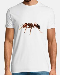 formica del fuoco (solenopsis invicta)