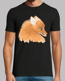 fox observ and o