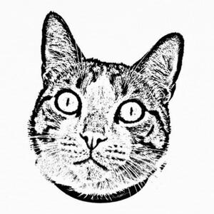 Tee-shirts gato