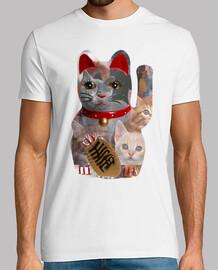 Gato chino gatos