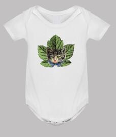 Gato planta