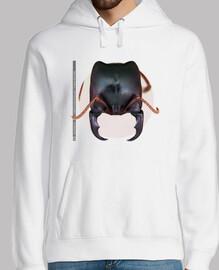 Hormiga, Ants, Mirmecología, Dorylus kohli