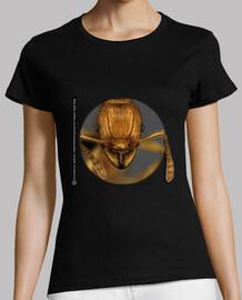 Hormiga, Ants, Mirmecología,Tetramorium elf