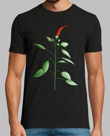 hot chili pepper plant botanical drawing