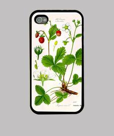 Ilustración botánica, fresa