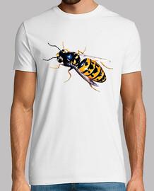 Insectos - Avispa