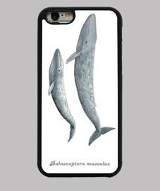 iphone6 manchon baleine bleue (balaenoptera musculus)