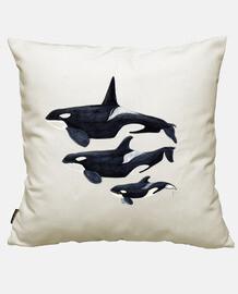 killerwal (orcinus orca)