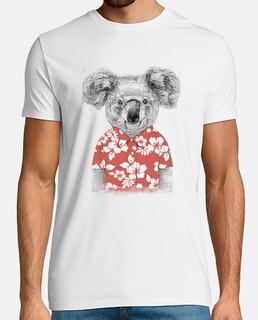 koala de verano