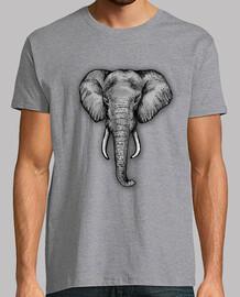 l'éléphant majestueux h2