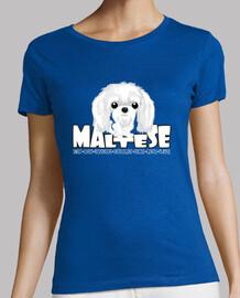 maltese - dg big head