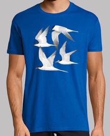 oiseaux de mer 1