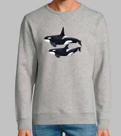 Orca duo (Orcinus orca)