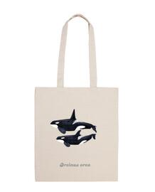 Orca duo (Orcinus orca) bandolera